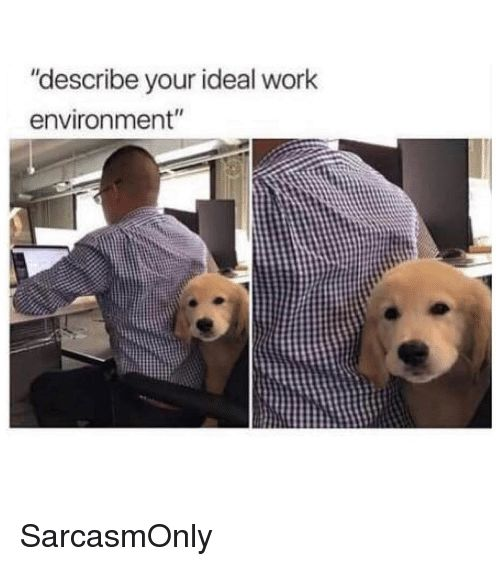 "Funny Memes and Work ""describe your ideal work environment"" Sarcasm ly"