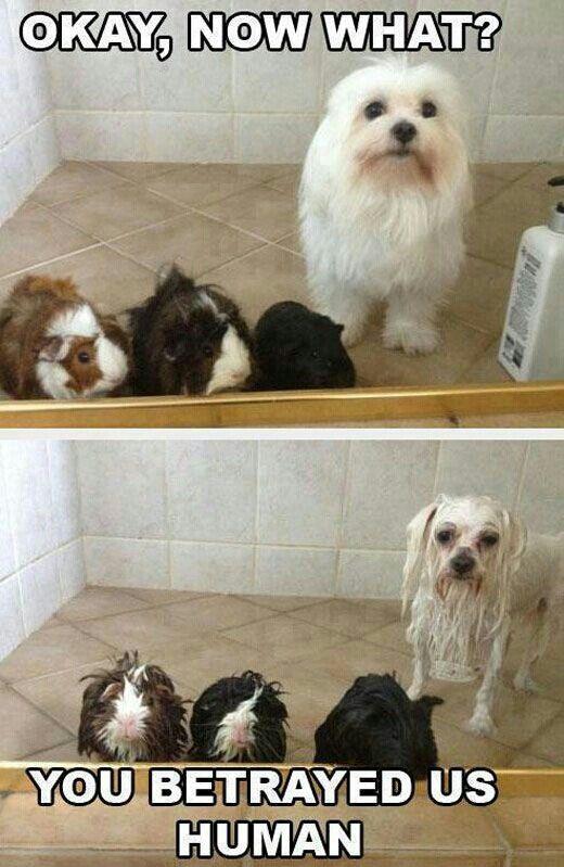 Dog · Funny pets