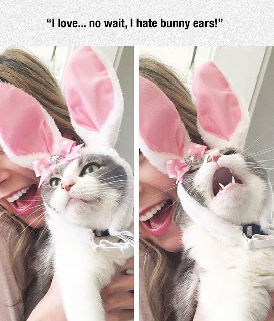 funny cat screaming Easter bunny costume