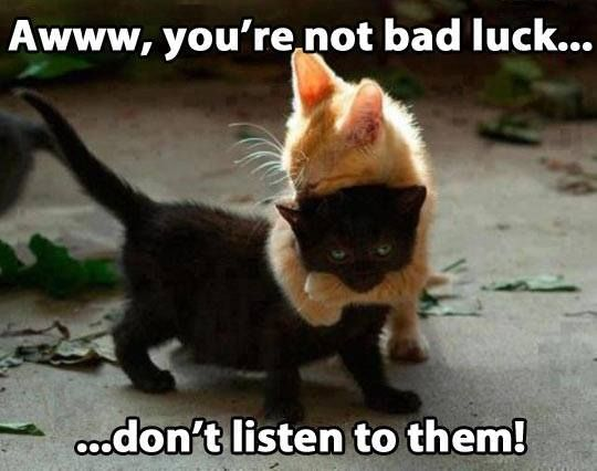 Funny Animals A w you re not bad luck don t listen to them Orange cats really are this sweet with their loved ones