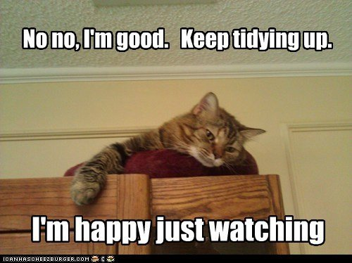 clean lazy helpful captions watch tidy Cats
