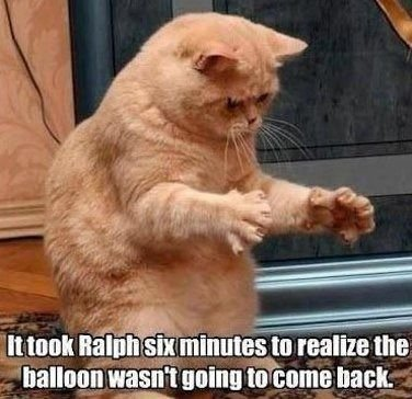funny cat meme of an orange tabby cat with his paws outstratched and the caption it took Ralph six minutes to realize the balloon wasn t goi