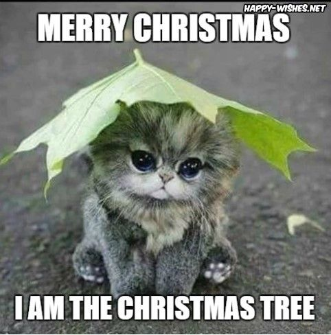 Santa Clause Toffee memes i am the christmas tree cat memes