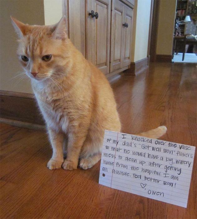 13 21 Examples Cat Shaming