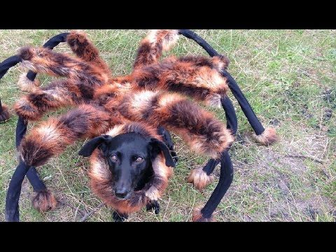 Mutant Giant Spider Dog SA Wardega