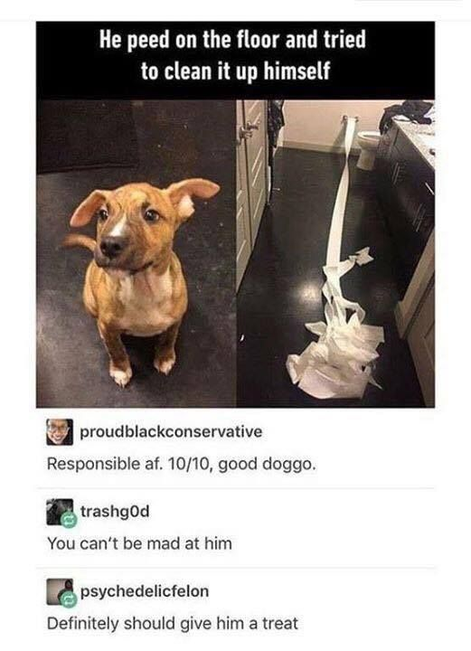 This good boy