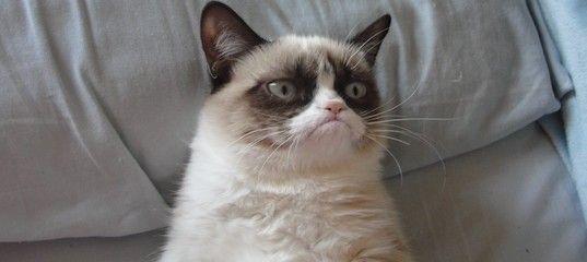 """Create meme """"grumpy cat funny cat ugly cat """""""