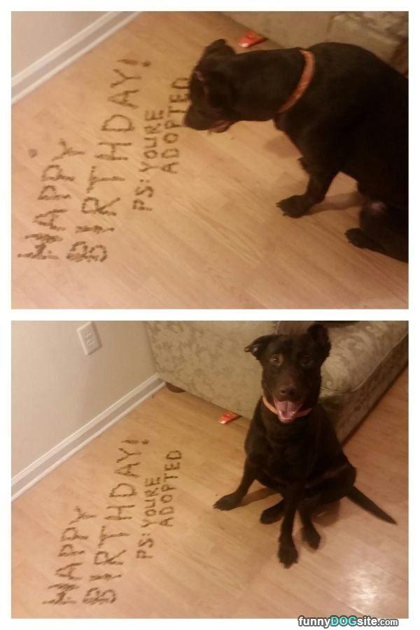 Happy Birthday Dog Birthday Quotes Happy Birthday Funny Dogs Funny Brother Birthday Quotes