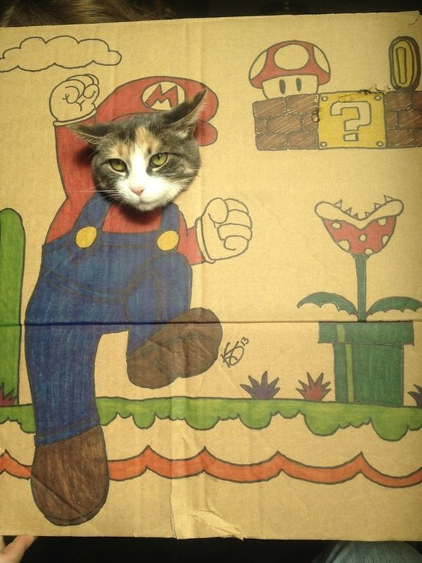 Funny Cats In Silly Cardboard Cutout Costumes DesignTAXI