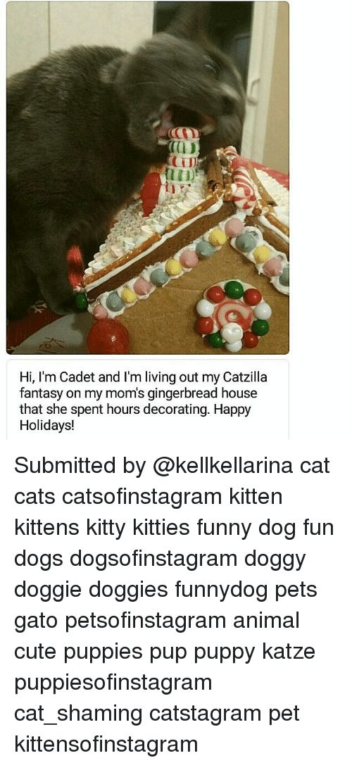 Cats Cute and Dogs 0D CTI Hi I m Cadet and