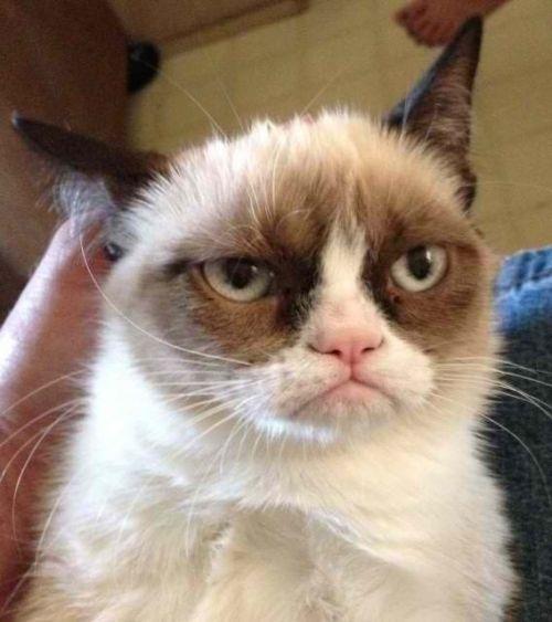 Grumpy Cat Reverse Blank Meme Template Grumpy Cats Grumpy Cat Humor Funny Cats