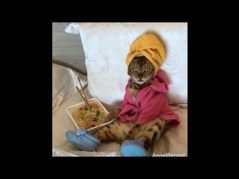 Funny Cats Videos pilation