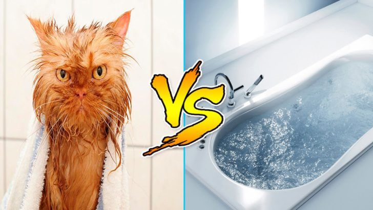 Cats Vs Water – Cats Falling In Water – Funny Cats 2016 – Funny Cat Bathing pilation Part 2