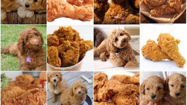Dogs That Look Like Fried Chicken