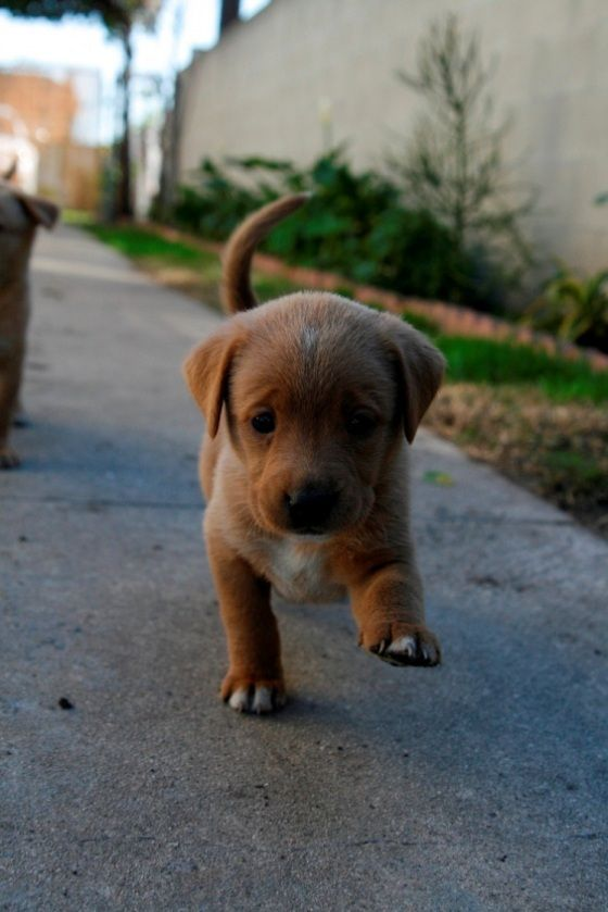 i want a puppy like this its so cute def my style of puppy