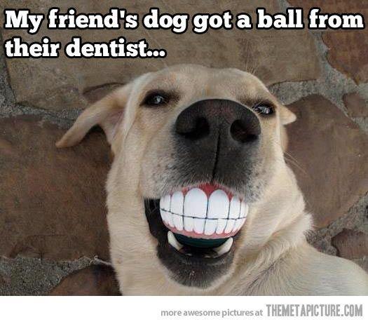 wpid dog teeth ball meme