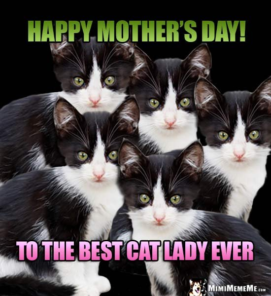 Funny Kitten Siblings Say Happy Mother s Day To the Best Cat Lady Ever