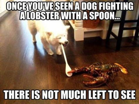 Grab Hold Of the Incredible Funny Croc and Dog Memes