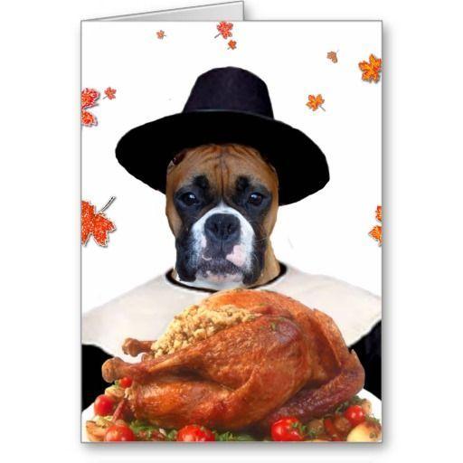 dog pics thanksgiving