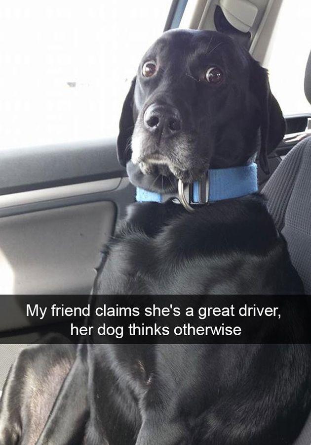 funny dog snapchats 😂😂😂😂