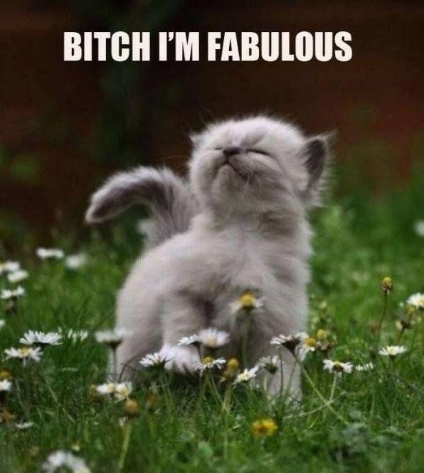 Bitch Im Fabulous funny cat meme