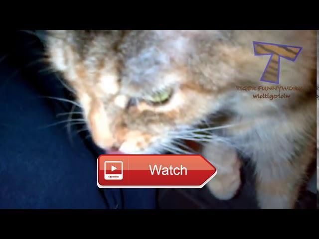 Funny Cats And Dogs React To Lemons Funny Animal pilation