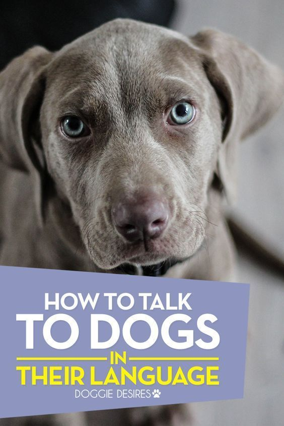 How to talk to dogs in their language doggiedesires