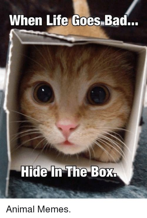 Grumpy Cat Hide and Hiding When Life Goes Bad Animal Memes