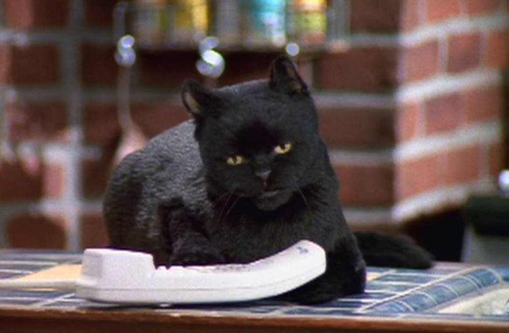 10 times Salem the cat said what we were really thinking HelloGiggles