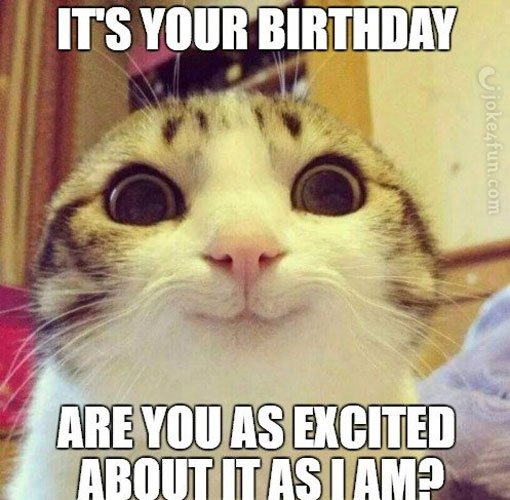 Happy Birthday Meme Cat memes Funny Cats