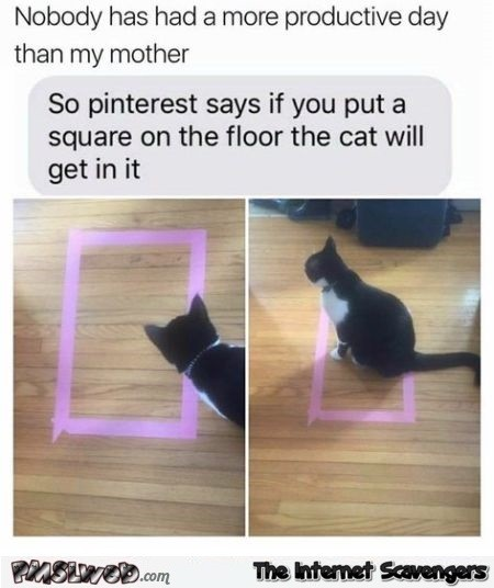 If you put a square on the floor your cat will in it funny meme