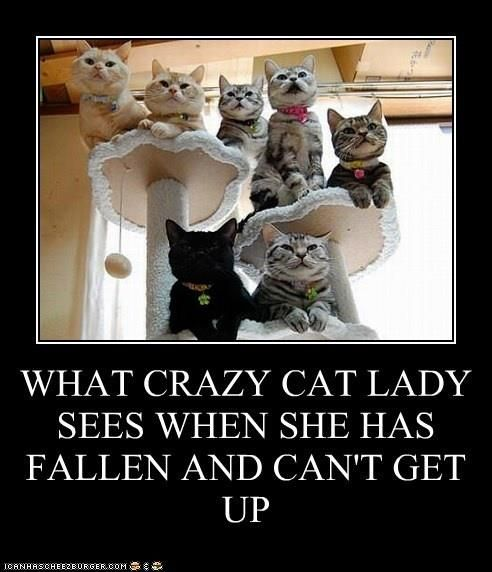 What crazy cat lady sees when she has fallen