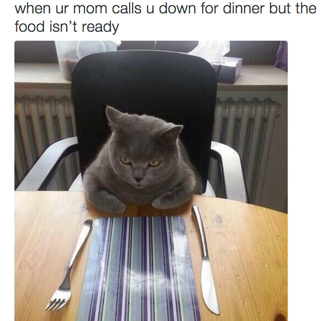 20 Funny Animal Memes That ll Make You Roar With Laughter