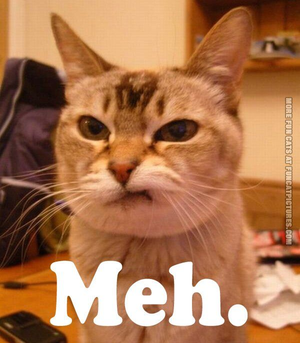 funny cat pics meh1