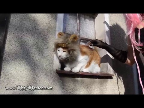 Cute Funny Cat with Lion Mask
