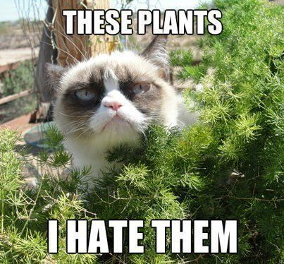 Cat cat meme cat in garden grumpy cat plants headstuff