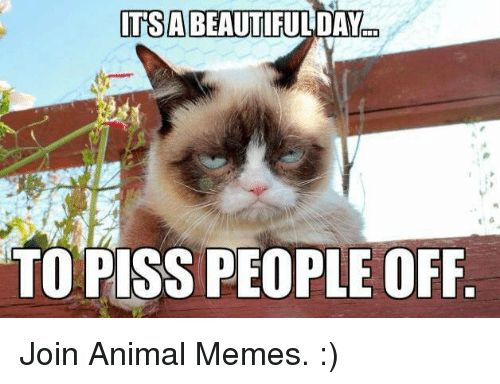 Grumpy Cat Pissed and Pissing ITSABEAUTIFULDAY TO PISS PEOPLE OFF Join Animal Memes