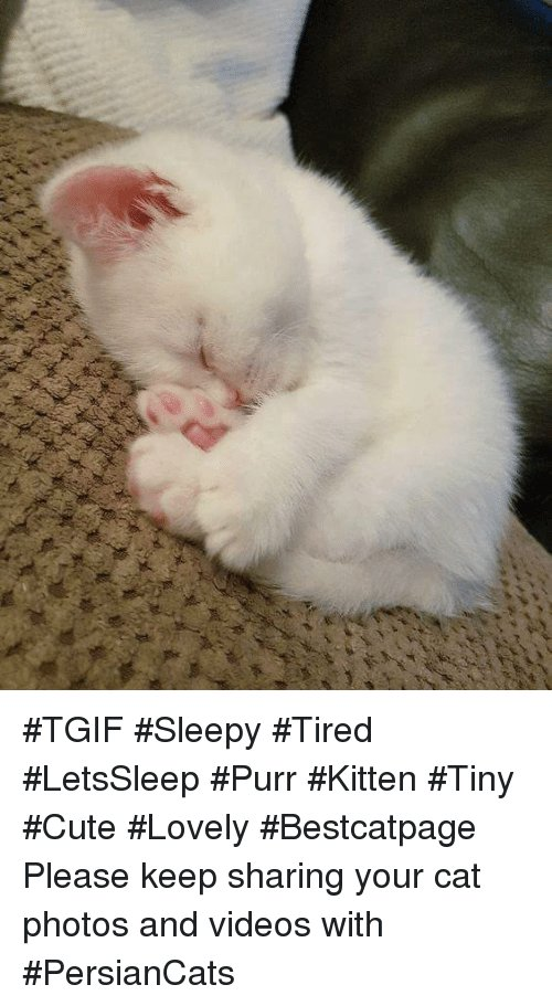 Cats Cute and Love TGIF Sleepy Tired LetsSleep