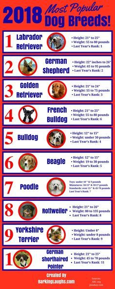 Top 10 Most Popular Dog Breeds 2018