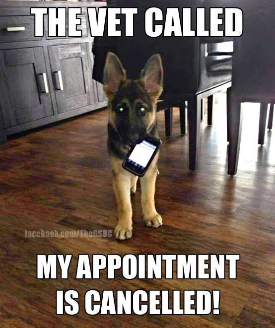 Try again Puppy Quotes Funny Funny Puppy Funny Puppies
