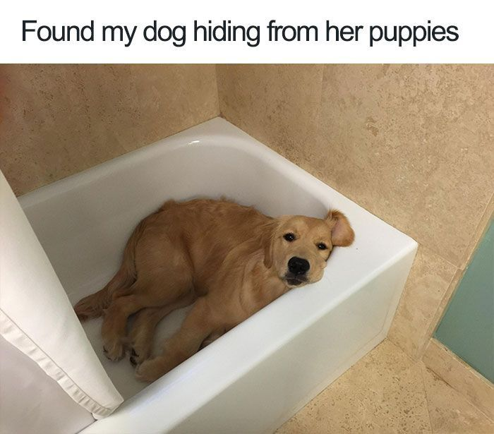 10 The Happiest Dog Memes Ever That Will Make You Smile From Ear To Ear