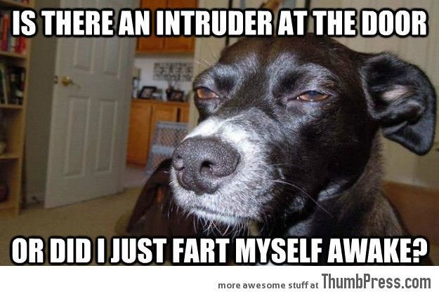 funny animal memes Best 113 Funny animal Memes