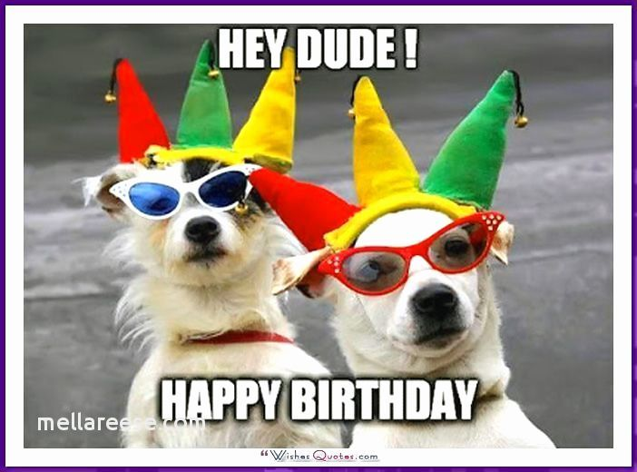 Dog Quotes Luxury Happy Birthday Dog Funny Dog Birthday Cards Luxury Fancy Google S S 15