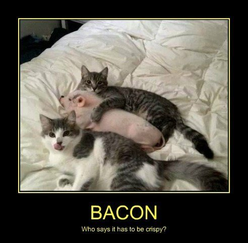 Cats bacon funny pig