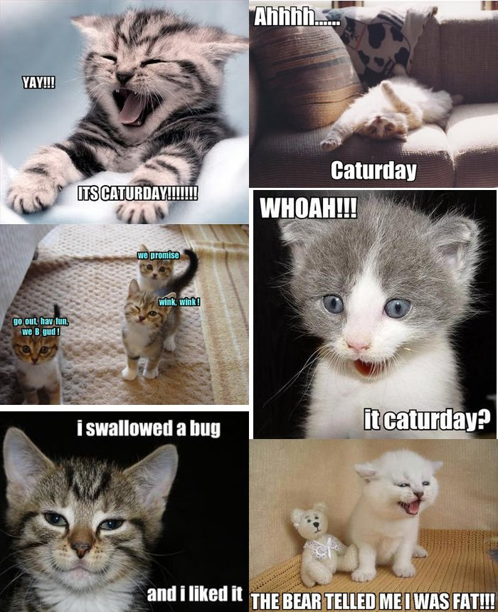 CatMemes It s Caturday
