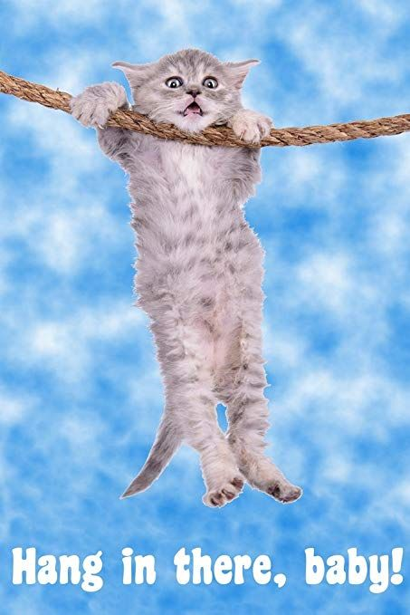 Hang in There Baby Cat Retro Motivational Poster 12x18 inch