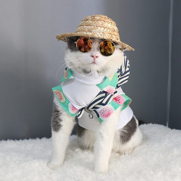 Cat Eye wear Pet Sunglasses Little Dog Glasses Cat Glasses s Props Dog cat Accessories Pet Supplies For Pet Products