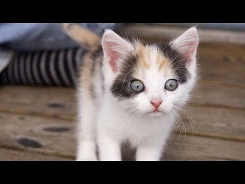 Kittens see do things for the first time Funny and cute cat pilation
