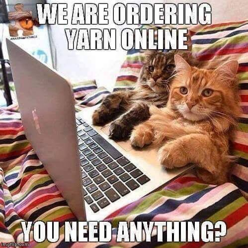 Cats ordering yarn online you need anything Funny Cats In Water