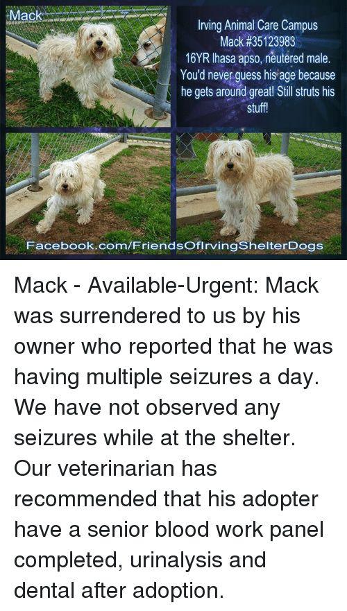 Memes and Work Irving Animal Care Campus Mack 16YR lhasa